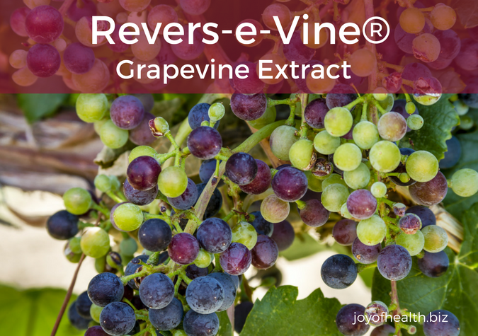 Revers-e-Vine® Grapevine Extract
